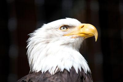 Eagle-med